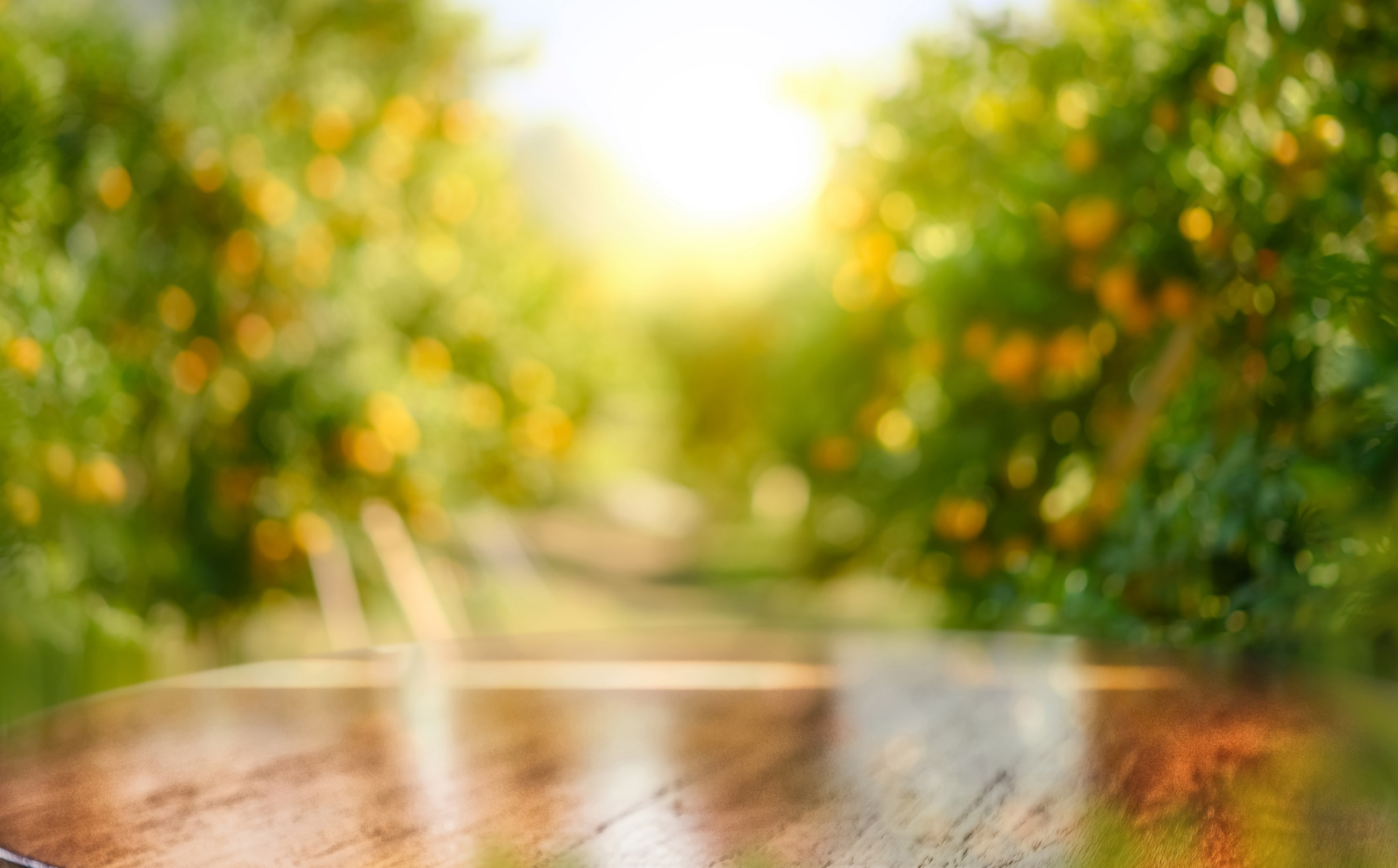 Empty wood table with free space over orange trees, orange field